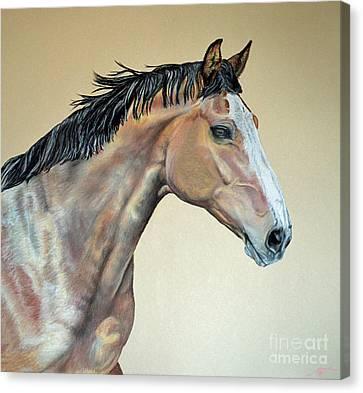 Veterinarian's Warm Blood Horse Canvas Print by Ann Marie Chaffin