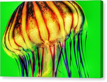 Vibrant Jellyfish Canvas Print by Marianna Mills