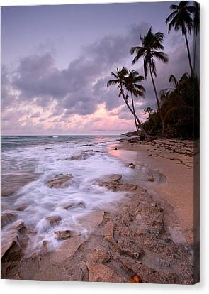 Vieques Sunrise Canvas Print by Patrick Downey