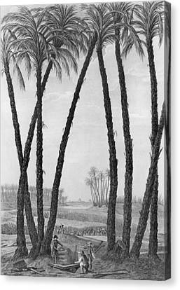 View Of The Ruins Of Memphis Seen From The South East Canvas Print by Jean Louis Delignon