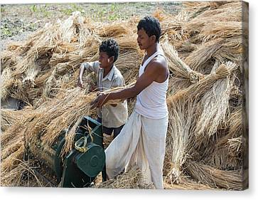 Villagers In The Sunderbans Canvas Print by Ashley Cooper