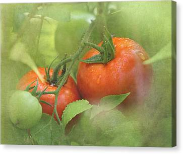 Vine Ripened Tomatoes Canvas Print by Angie Vogel