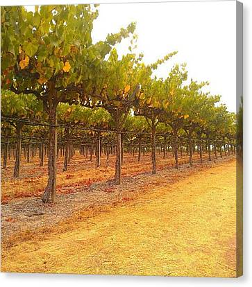 Vines Aligned Canvas Print by CML Brown