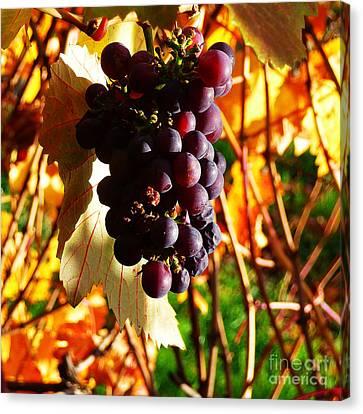 Vineyard 19 Canvas Print by Xueling Zou
