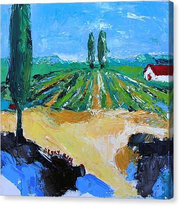 Vineyard 3 Canvas Print by Becky Kim