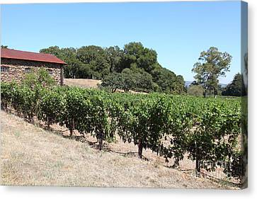 Vineyard And Stallion Barn At Historic Jack London Ranch In Glen Ellen Sonoma California 5d24579 Canvas Print by Wingsdomain Art and Photography