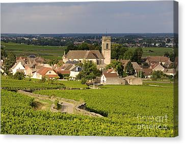 Vineyard And Village Of Pommard. Cote D'or. Route Des Grands Crus. Burgundy. France. Europe Canvas Print by Bernard Jaubert