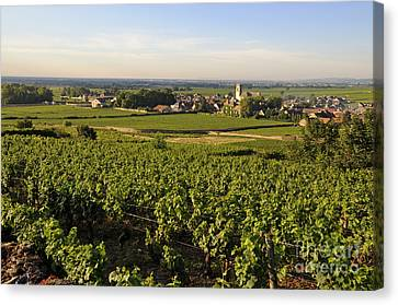 Vineyard And Village Of Pommard. Cote D'or. Route Des Grands Crus. Burgundy.france. Europe Canvas Print by Bernard Jaubert