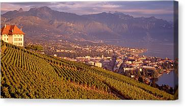 Vineyard At A Hillside, Lake Geneva Canvas Print by Panoramic Images