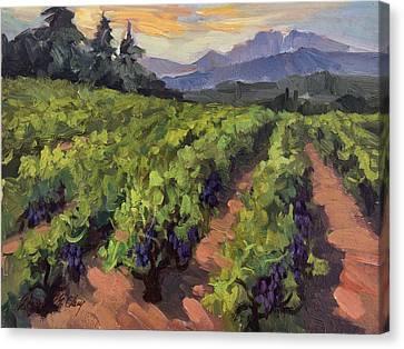 Vineyard At Dentelles Canvas Print by Diane McClary