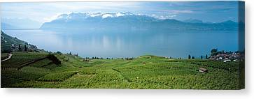 Vineyard At The Lakeside, Lake Geneva Canvas Print by Panoramic Images