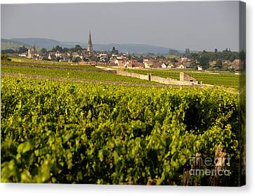 Vineyard In Front Of The Village Of Meursault. Burgundy Wine Road. Cote D'or.burgundy. France. Europ Canvas Print by Bernard Jaubert