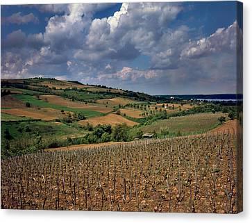 Vineyard In Frushka Gora. Serbia Canvas Print by Juan Carlos Ferro Duque