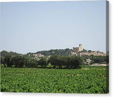 Vineyard In Provence Canvas Print by Pema Hou