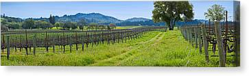 Vineyard In Sonoma Valley, California Canvas Print by Panoramic Images