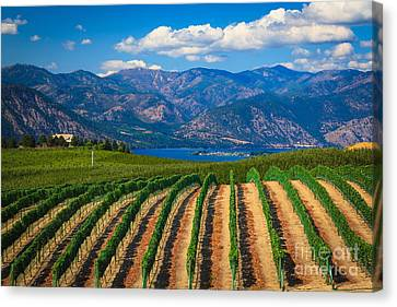 Vineyard In The Mountains Canvas Print by Inge Johnsson