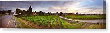 Vineyard, Mercurey, France Canvas Print by Panoramic Images
