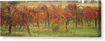Vineyard On A Landscape, Apennines Canvas Print by Panoramic Images