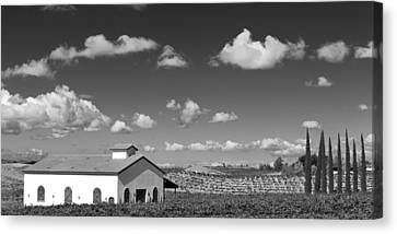 Vineyard Canvas Print by Peter Tellone