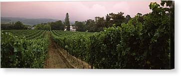 Vineyard With A Cape Dutch Style House Canvas Print by Panoramic Images