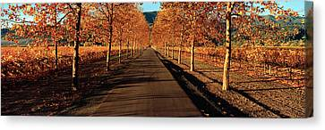 Vineyards Along A Road, Beaulieu Canvas Print by Panoramic Images