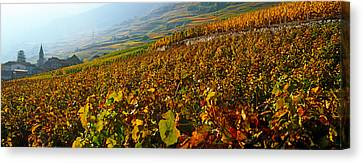 Vineyards And Village In Autumn, Valais Canvas Print by Panoramic Images