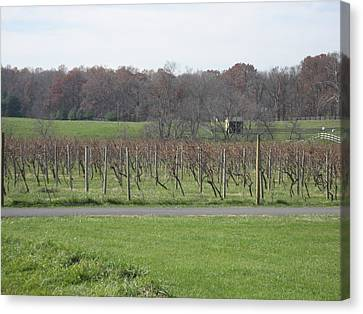 Vineyards In Va - 121234 Canvas Print by DC Photographer