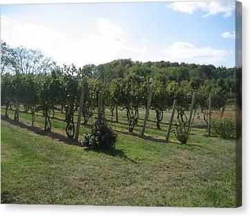 Vineyards In Va - 121251 Canvas Print by DC Photographer