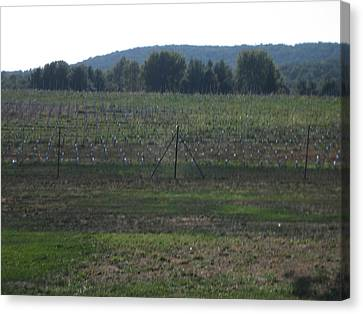 Vineyards In Va - 121255 Canvas Print by DC Photographer