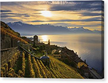 Vineyards Saint-saphorin, Lavaux Canvas Print by Yves Marcoux