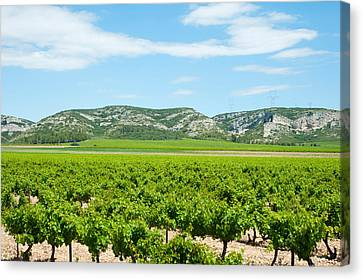 Vineyards With Hills In The Background Canvas Print by Panoramic Images