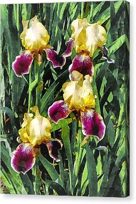 Vingolf Iris Canvas Print by Susan Savad