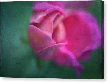 Vining Geranium Bud, Digitally Altered Canvas Print by Rona Schwarz