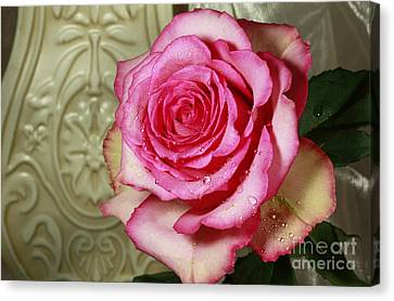 Vintage Beauty Rose Canvas Print by Inspired Nature Photography Fine Art Photography