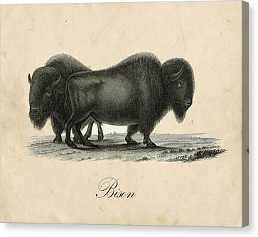 Vintage Bison Canvas Print by Pati Photography