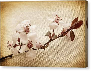 Vintage Blossoms Canvas Print by Caitlyn  Grasso