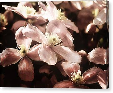 Vintage Clematis Canvas Print by Georgiana Romanovna