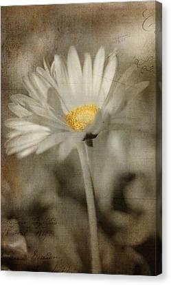 Vintage Daisy Canvas Print by Joann Vitali