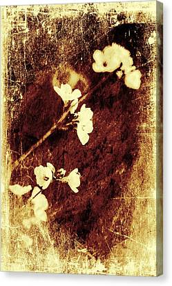 Vintage Flower Canvas Print by Jaroslaw Grudzinski