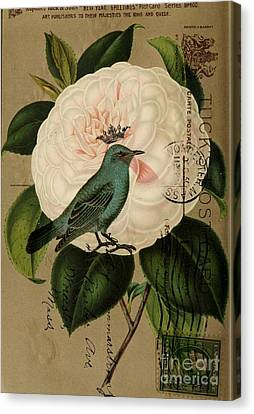 Vintage French Botanical Art Pink Rose Teal Bird Canvas Print by Cranberry Sky