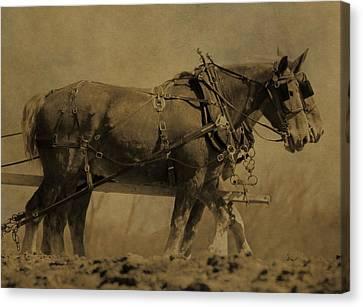 Vintage Horse Plow Canvas Print by Dan Sproul