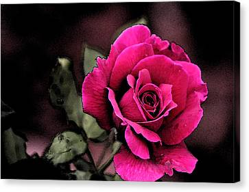 Vintage Love Rose Canvas Print by Kay Novy