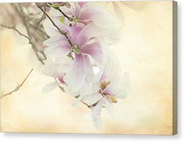 Vintage Magnolia Canvas Print by Tracy Munson