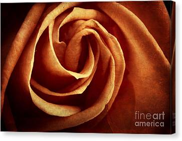 Vintage Rose Canvas Print by Mythja  Photography