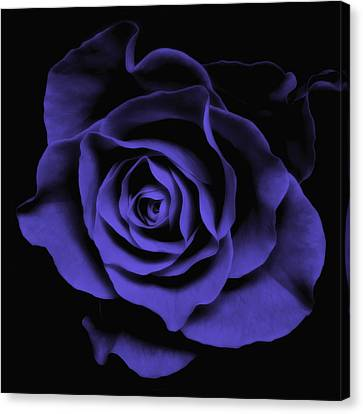 Abstract Blue Roses Flowers Art Work Photography Canvas Print by Artecco Fine Art Photography