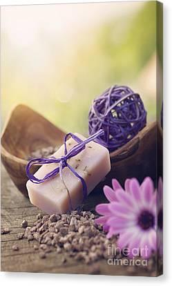 Violet Dayspa Nature Set Canvas Print by Mythja  Photography