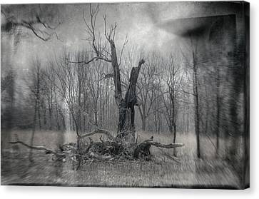 Visitor In The Woods Canvas Print by Jim Shackett