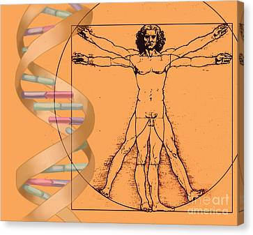 Vitruvian Man With Dna Canvas Print by Spencer Sutton