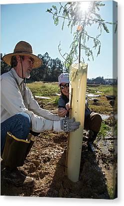 Volunteers Planting Trees Canvas Print by Jim West