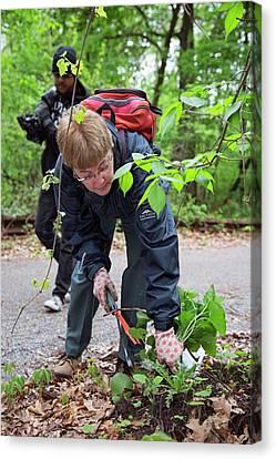 Volunteers Removing Weeds Canvas Print by Jim West